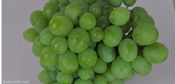 نهال انگور کندری