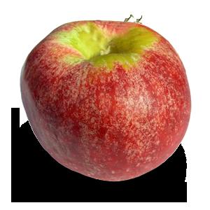 نهال سیب گراون اشتاین آلمان