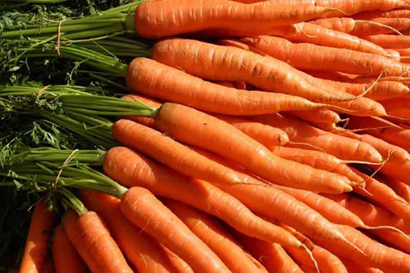 هویج نانتس