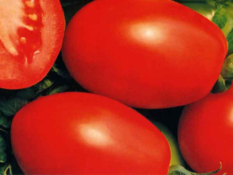 گوجه فرنگی ریوگراند