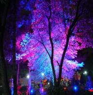 نورپردازی فضای سبز
