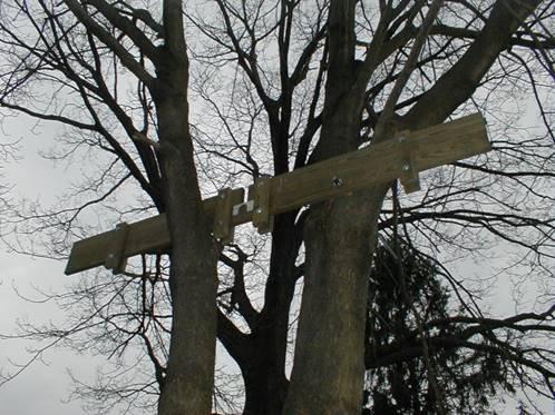 ساخت کلبه درختی