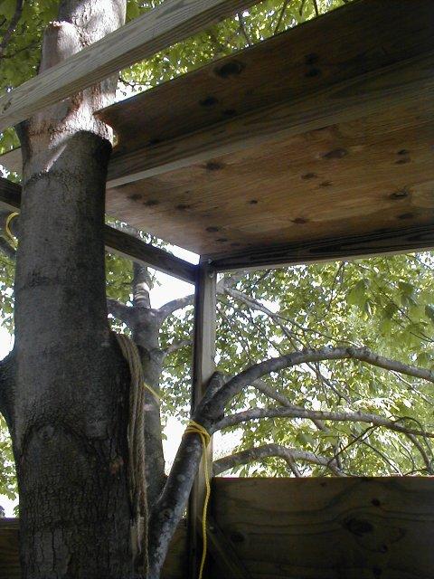 کلبه درختی